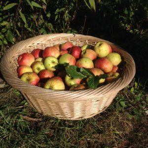 we nemen een mand vol appels mee naar huis