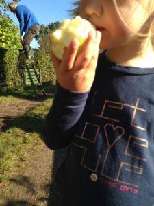 de-kinderherberg-gastouderopvang-appels-plukken-lekker-een-appel-eten-en-nog-biologisch-ook-img_1323