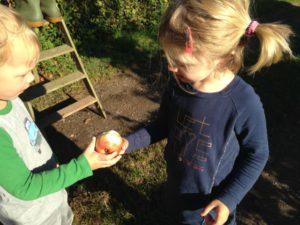 de-kinderherberg-gastouderopvang-appels-plukken-samen-een-appel-delen-img_1302