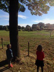 de-kinderherberg-gastouderopvang-de-kinderen-kijken-naar-de-koeien-img_0436