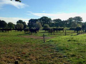 de-kinderherberg-gastouderopvang-de-koeien-en-de-boer-img_1430