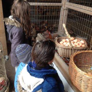 de-kinderherberg-gastouderopvang-kijken-naar-de-kippen-op-kaasboerderij-de-ossenwaard-in-werkhoven-img_0771